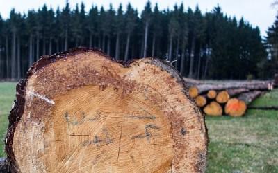 Killing fewer trees when printing a Gantt Chart