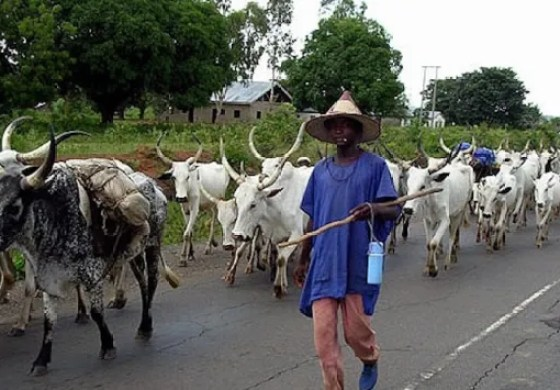 Cattle rustling: Former DIG wants FG to check proliferation of small arms