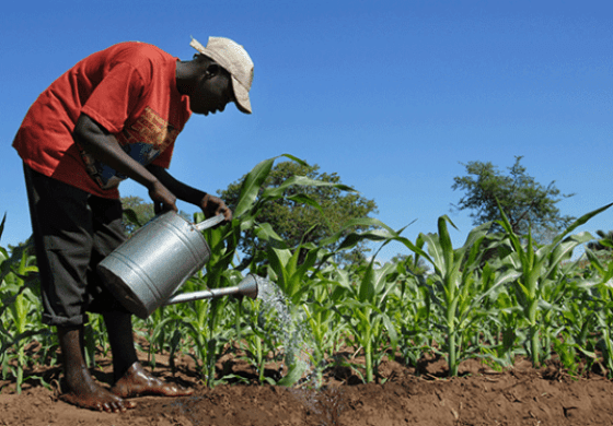 FG's agric policy can stabilise Nigeria's economy- Agronomist