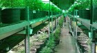 3-year-old marijuana real estate fund raises $12M