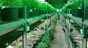 3-year-old marijuana real estate fund raises $12M