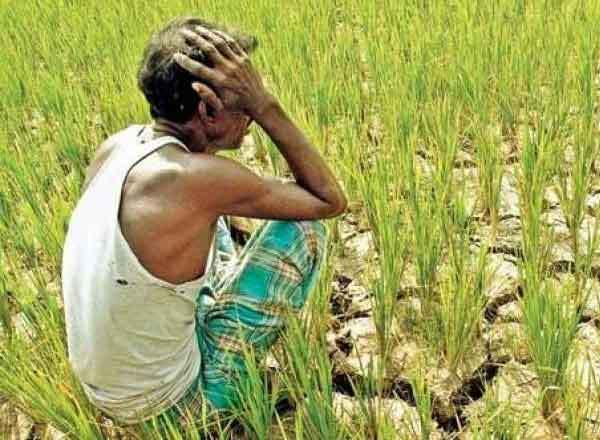 Under PM Fasal Bima Yojana, farmers will be compensated for crop loss
