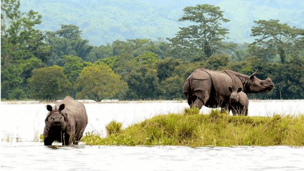Visit Kaziranga National Park, Assam