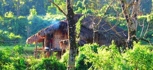 Visit Namdapha Wildlife Sanctuary, Arunachal Pradesh