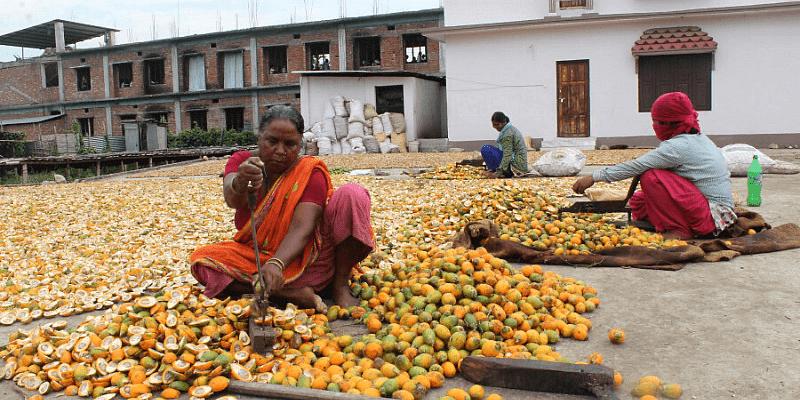 Female farmer harvesting betel nut (Photo courtesy: Arjun Rajbanshi)