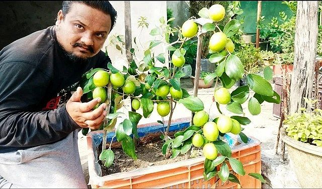 How to Grow Medicinal Plants