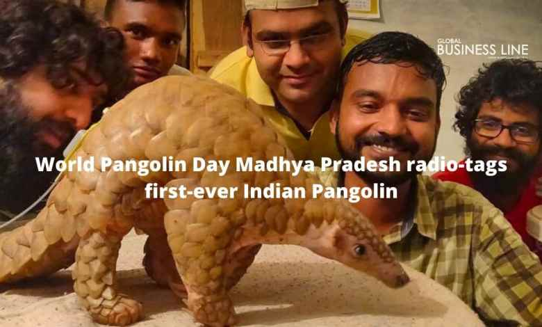 World Pangolin Day Madhya Pradesh radio-tags first-ever Indian Pangolin