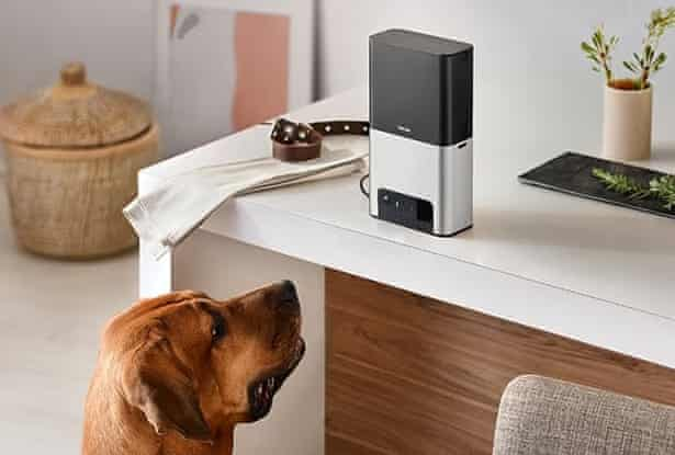 A dog looks at a Petcube device