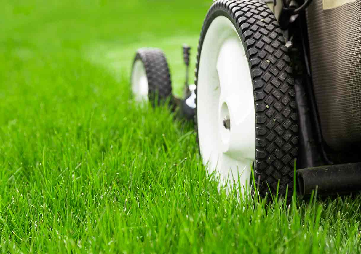 10 Lawn Care Tips You Have To Know – Read It – Business Module Hub