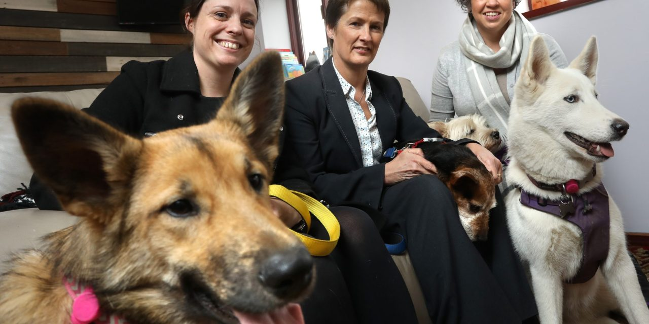 Animal rescue centre homes in on firm's advice to help support planned investment