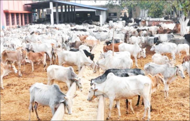 Cattle Rearing Business Plan