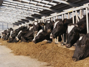 African Governments Meet to Discuss Sustainable Future of Livestock