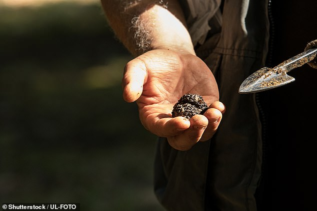 Over 100 people were tricked into investing over £9million in fictitious truffle farms
