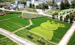 A rice field painting of Peppa Pig in Huangshan, China.