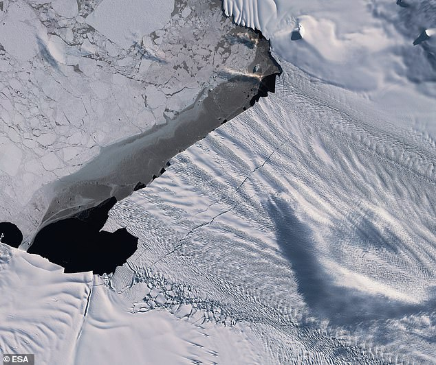 The ESA's Copernicus Satellite program has captured images of cracks and ice berg calving on the Pine Island Glacier (pictured above)