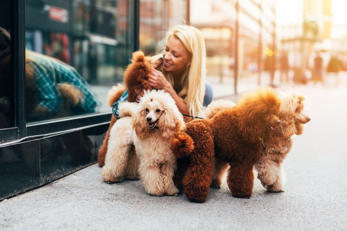 Love furry friends? This could be your dream job