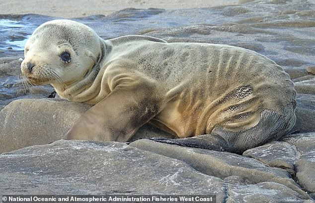 In addition to birds, experts found hundreds of sea lions, fin wales and sea otters also perished over the three year span