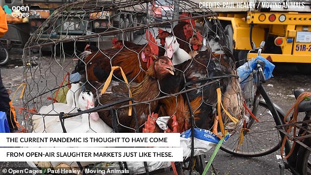 The World Health Organisation has warned that conditions like these risk triggering a second pandemic. Coronavirus is thought to have jumped into humans at a wet market