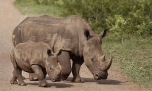 Redoubled efforts are critical to prevent a resurgence of poaching of one of the world's most endangered mammals as South Africa gradually reopens from lockdown, officials and wildlife activists warn.