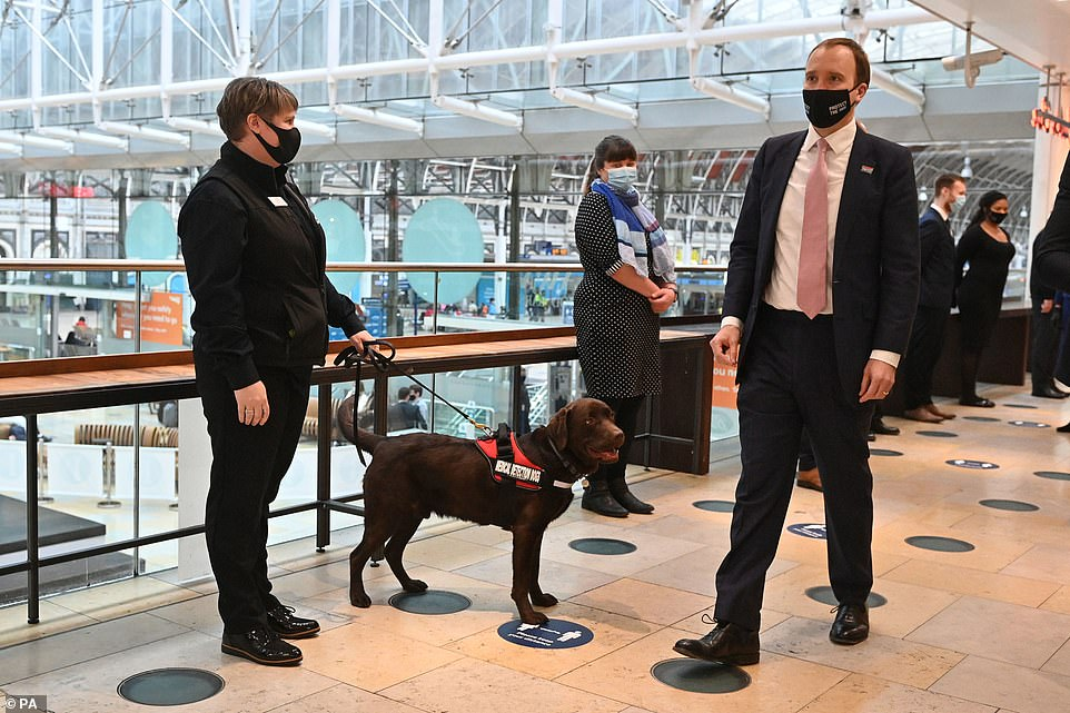 Health Secretary Matt Hancock is pictured during a visit to London's Paddington railway station today to watch a demonstration by the charity Medical Detection Dogs, which trains dogs to detect the odour of human disease