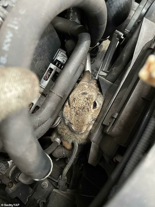One mechanic was gobsmacked after finding a rabbit stuck inside a car - but luckily managed to recover the animal alive and well after removing the entire front of the vehicle