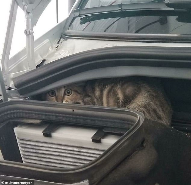 One car owner also found an unusual furry friend tucked in their vehicle, but they only discovered the cat after driving for a staggering 30 miles