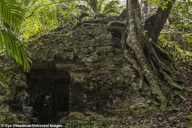 Rainforest trees have obscured much of the Mayan city of Tikal, which reached its pinnacle between200 and 900AD