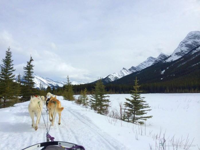 Dogsledding in Canmore, Alberta