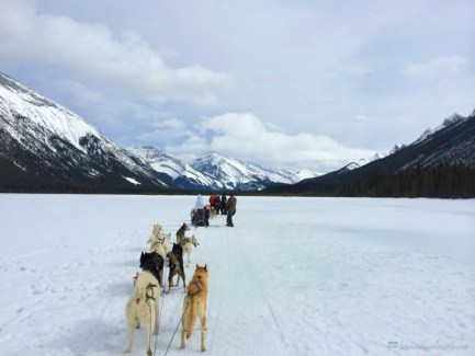 25 Items in My Bucket List Dogsledding Canmore Alberta Canada