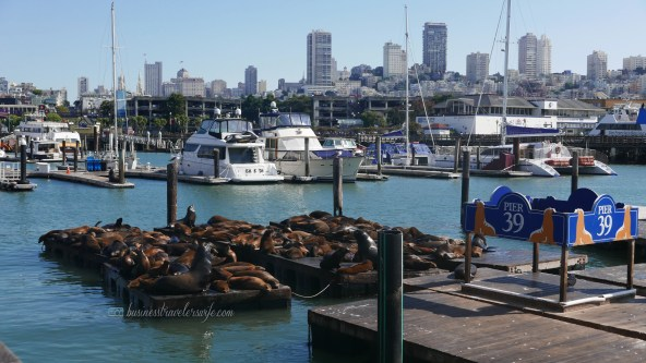 sights to see in san francisco Fisherman's Wharf Pier 39 sea lions