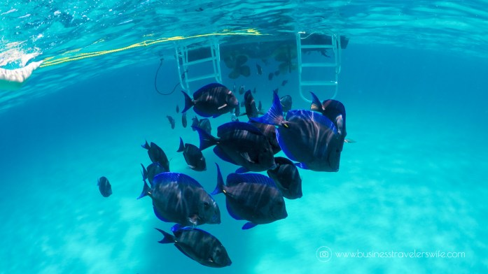 Amazing Snorkeling Tour with Stuart Cove's Dive Bahamas Hollywood Bowl Tropical Fish