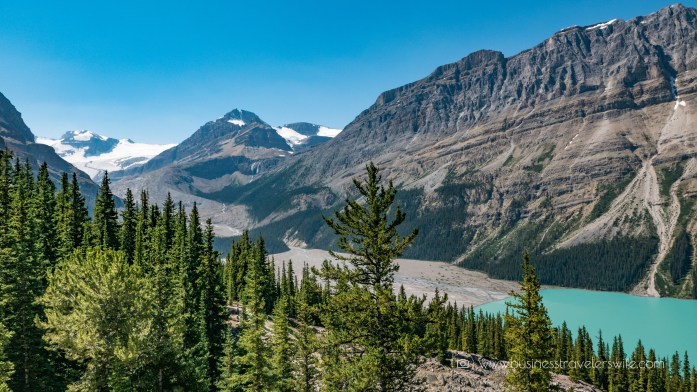 Scenic Summer Roadtrip to the Canadian Rockies Peyto Lake