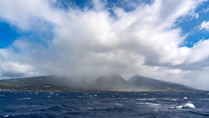 10 Things to Know Before You Go Whale Watching in Maui Hawaii