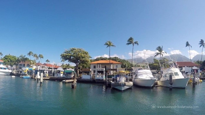 10 Things to Know Before You Go Whale Watching in Maui Hawaii Lahaina Bay Tours