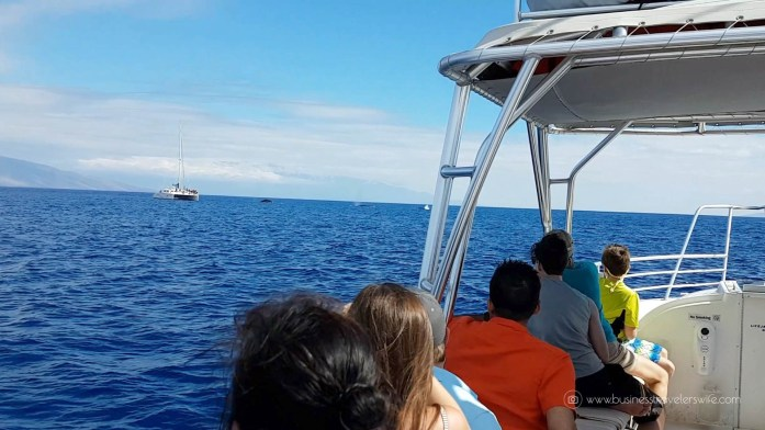 10 Things to Know Before You Go Whale Watching in Maui Hawaii tour Humpback whale