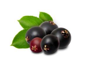 elderberry for flu