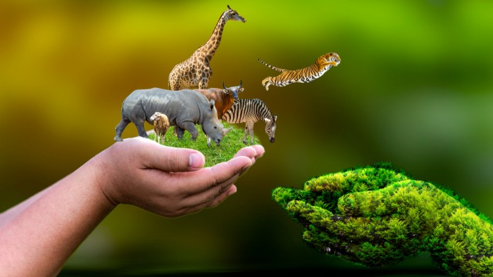 endangered animals of world