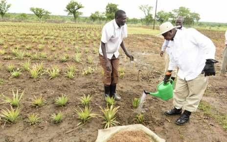 President Museveni to officially open the Agric show tomorrow The president of Uganda Farmers Federation Dick Nuwamanya Kamuganga has said President Yoweri Kauguta Museveni is expected to officially open the 26th National Agricultural trade show in Jinja.