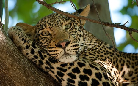 Wild life is one of the best features of Botswana