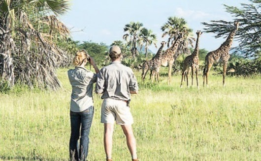 According to the Bank of Tanzania Monthly Economic Review report, the tourism industry was the main source of foreign exchange receipts by Tanzania in 2018.