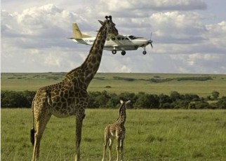 Tanzania tour operators are upbeat at the news that the government would execute the reforms highlighted on the blueprint to improve the business environment.