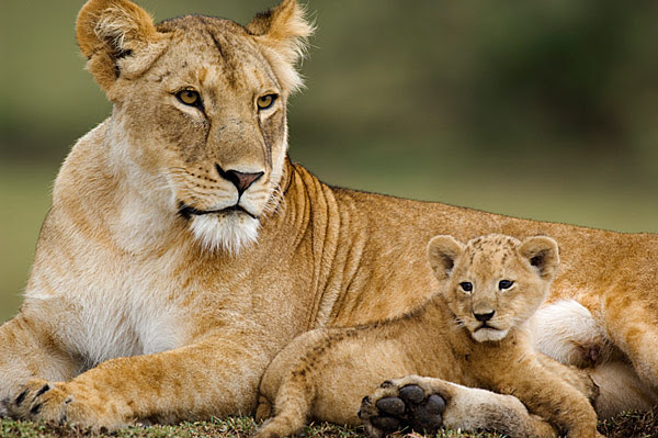 Serengeti National Park in Tanzania held onto first place, for the third year in a row.