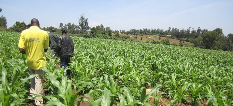 President Yoweri Museveni has encouraged Danish agricultural investors to consider setting up agricultural processing and production industries in Uganda as opposed to the costly process of importing agriculture machines.