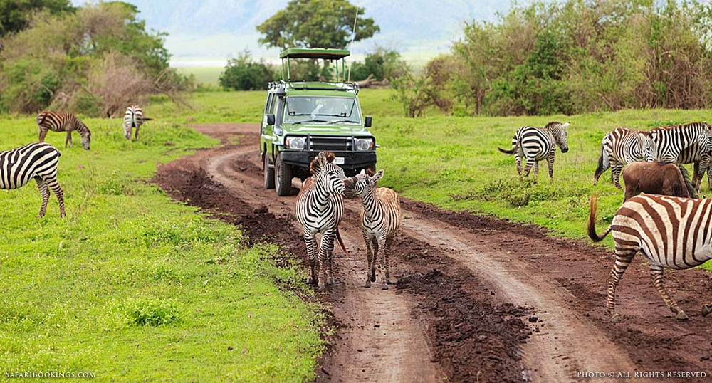 Many small-scale companies in the tourism and hospitality sector in Tanzania are facing a bleak future as they are finding it difficult to comply with the tax regime.