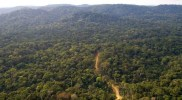 Mau Forest admitted to Queen's Canopy