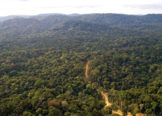The expansive Mau Forest Complex in Kenya is set to get fresh breath after it was admitted to the Queen's Commonwealth Canopy (QCC).