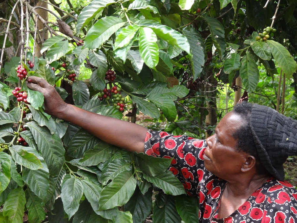Despite the Integration of 6 economies in the East African Community (EAC), many Small -scale farmers especially women have for so long not felt the impact of the Integration on their Livelihood.
