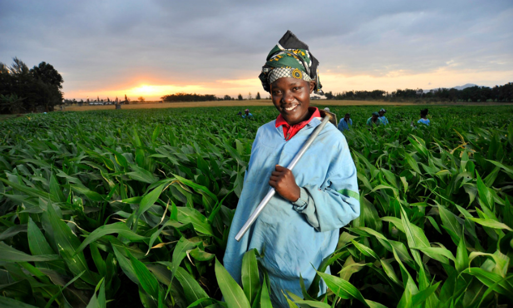 Digital Opportunities in Agriculture-AFDB, FAO and CGIAR