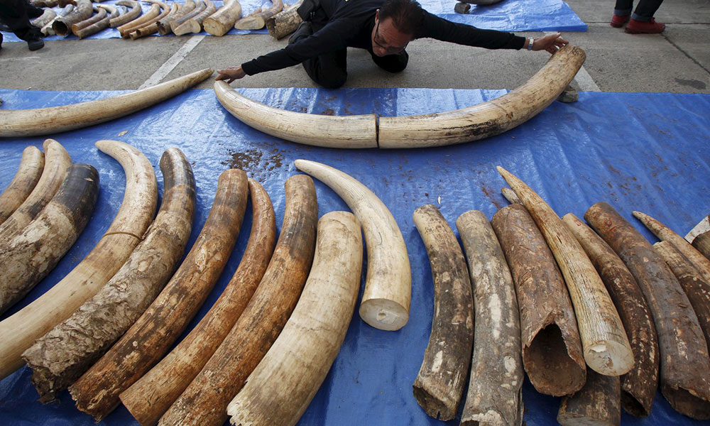 New Report Reveals Illicit Trade in East Africa