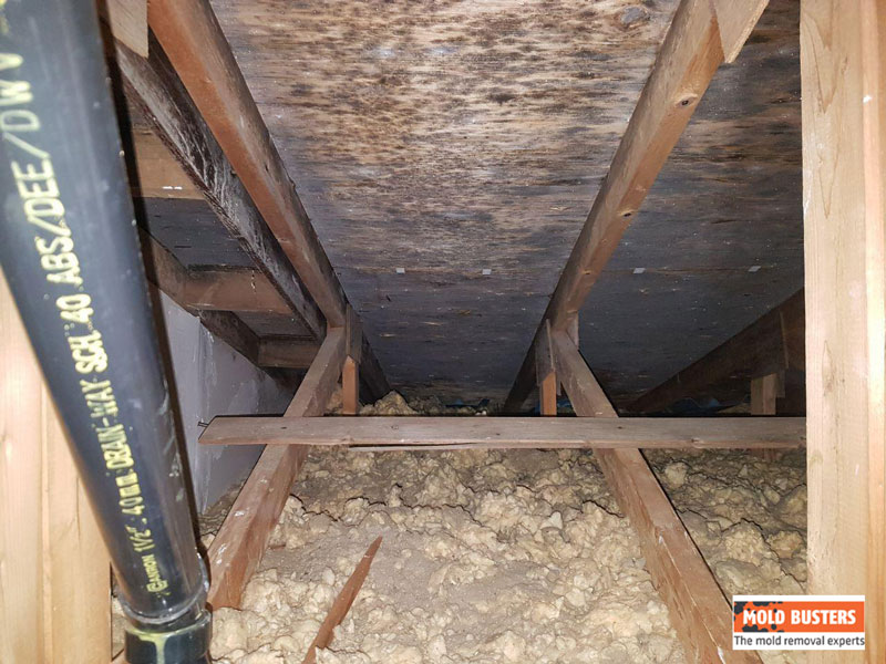 Mold on Wood   Mold Removal Services in Ottawa & Montreal